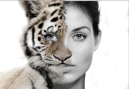 Morphing Human faces with Animal Faces i