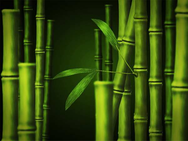 How to create bamboo in adobe photoshop