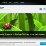 boldy_wordpress