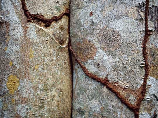 10 Magnificent Natural Patterns of Tree Photos