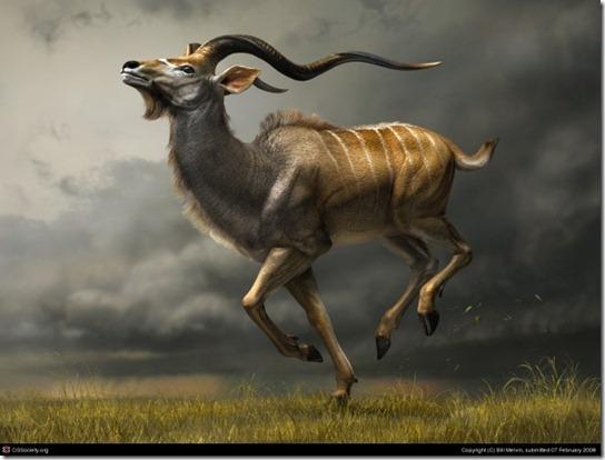 Charging_Kudu