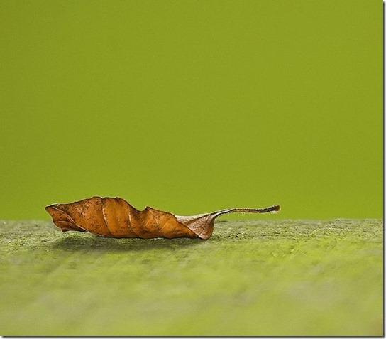 minialist-photography-10
