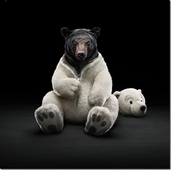 Black-bear-l