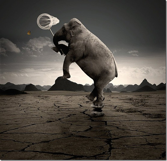 Crazy-Elephant-l
