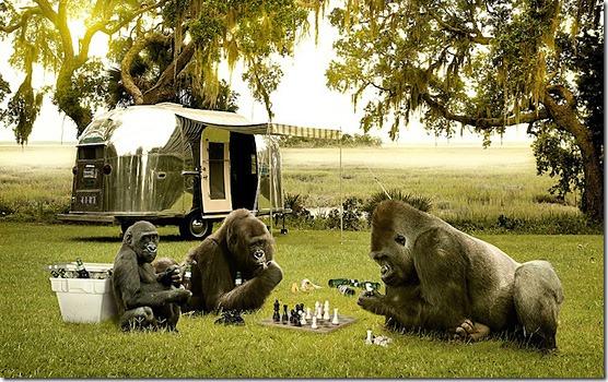 Play-Chess-l