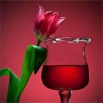 glass-photography-1.jpg