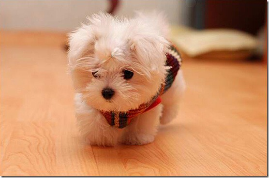 Baby Puppy Image