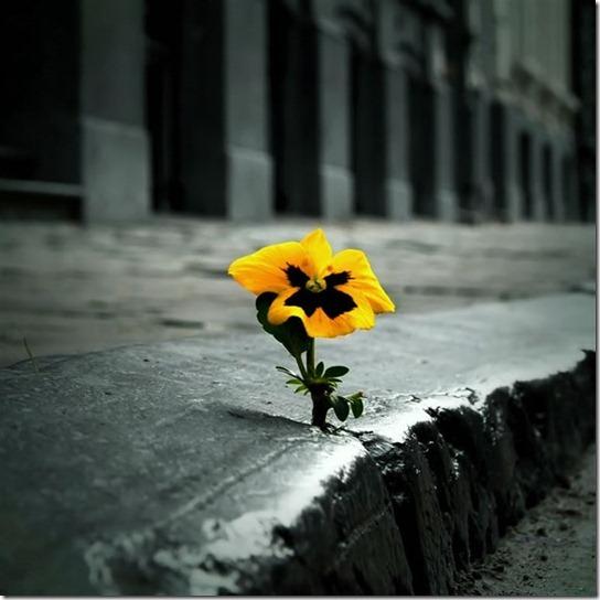 alone-sad-photos-12