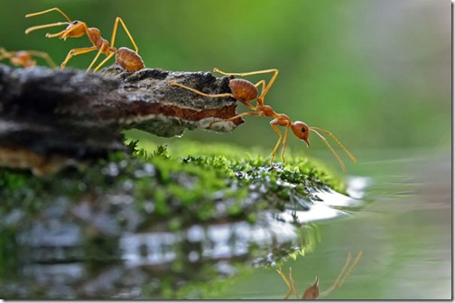 ants-drinking-water