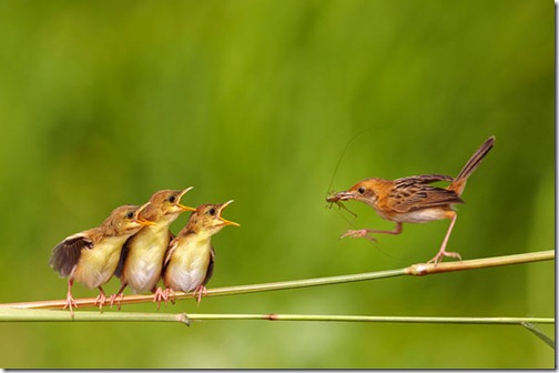 bird-feeding-children