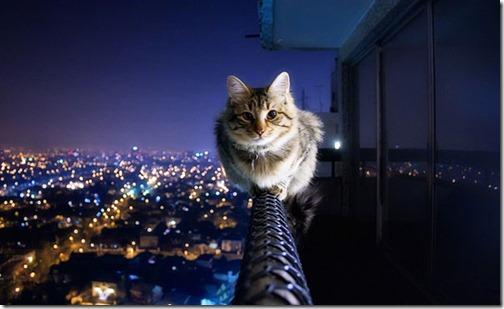 fearless-cat