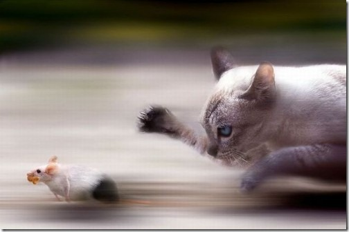 motion-blur-photos-17