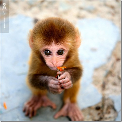 wildlife-animals-10