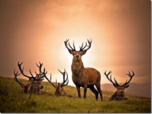 wildlife-animals-12