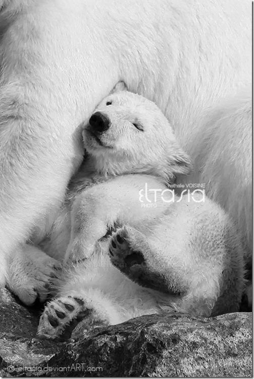 wildlife-animals-27