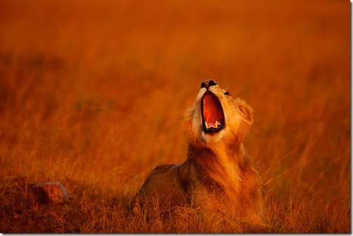 wildlife-animals-8