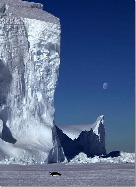 earth-poles-16
