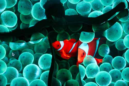 Truly Perfect Shots of Underwater Photos