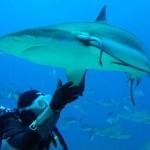 underwaterphotography15