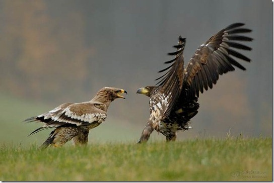 Stunning Big Birds Captured in Action Photography