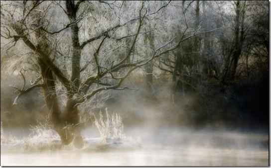 foggy-photography-10