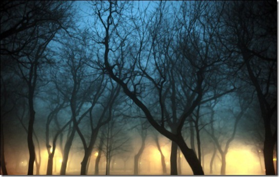 foggy-photography-17
