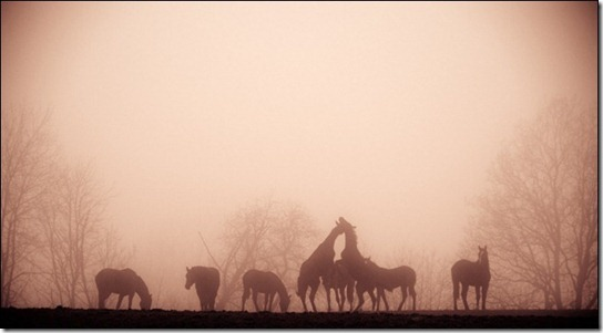 foggy-photography-27