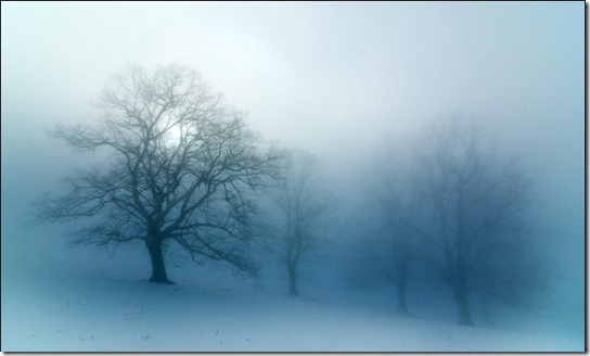 foggy-photography-28