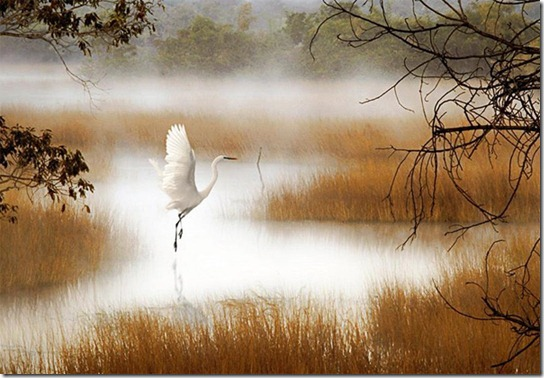 foggy-photography-6