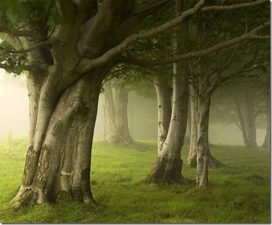 foggy-photography-7