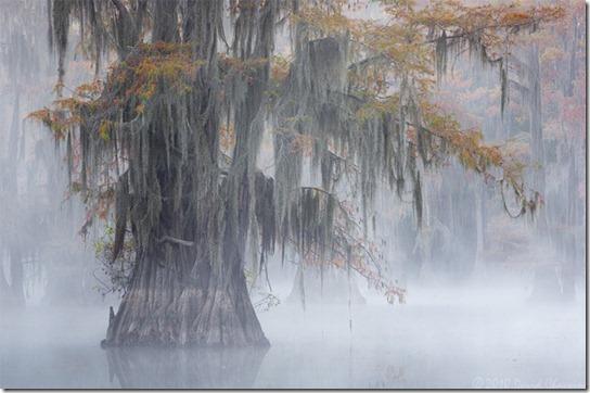 foggy-photography-9