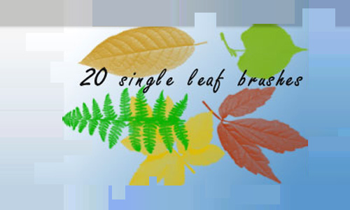 Single Leaf Set Bruches