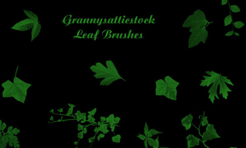 Various Leaf Brushes Photoshop