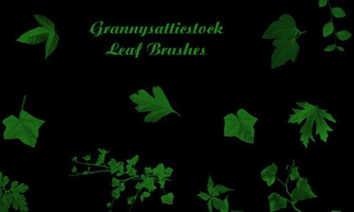 Various Leaf Brushes Photoshop