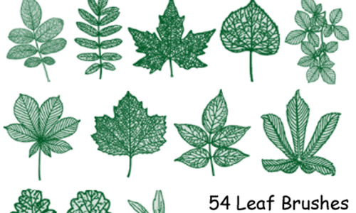 PS7 54 Leaf Brushes