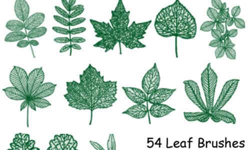 PS7 54 Leaf Brushes