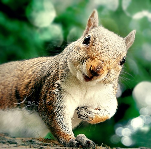 Adorable Animals Photos That Amaze You