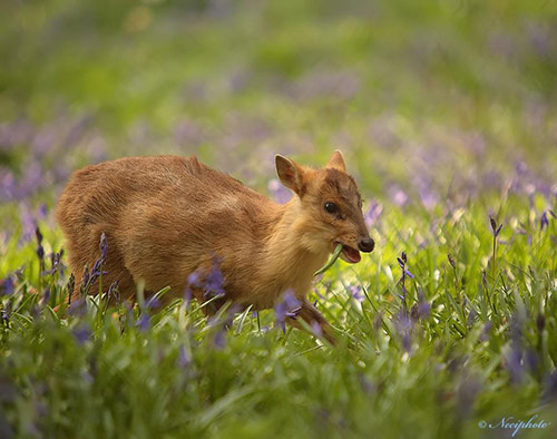 Adorable Animals Photos That Amaze You