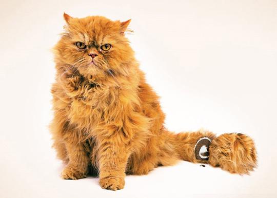 4-Cake Cat