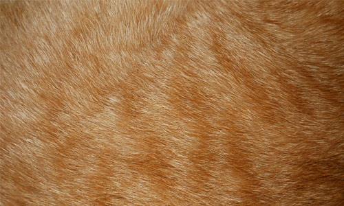 Cat Fur Texture 1