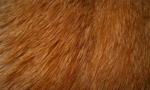 Download Wallpaper 1920x1080 fur, wool, hair, long hair Full HD ...