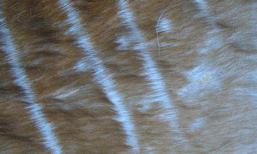 Deer Fur