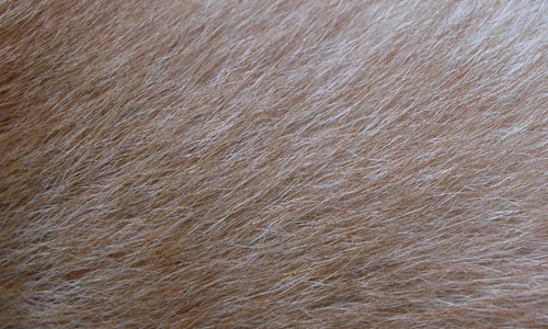 Fur Fine Brown