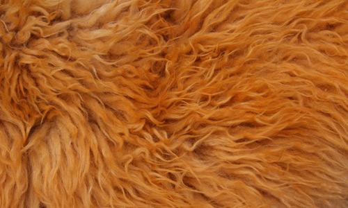 Fur Texture 8