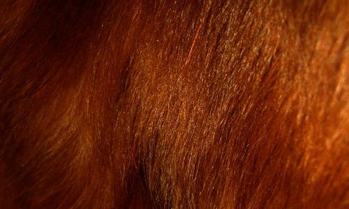 Fur-Texture