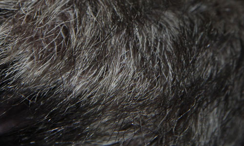 Fur Textures 1