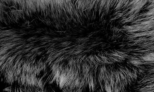 Fur Textures 7