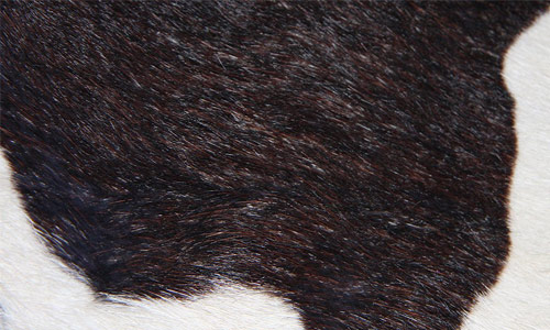 Fur Textures 9