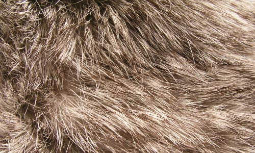 Rabbit Fur Close-Up