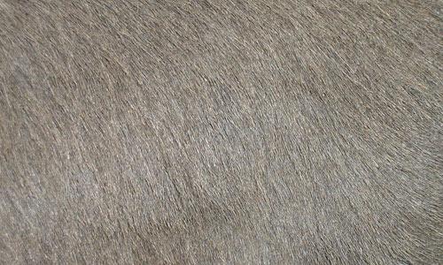Tabus Fur Gray